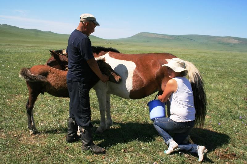 mongolia-mungitura-delle-cavalle