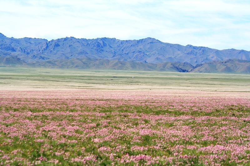 mongolia-agosto-2012-3