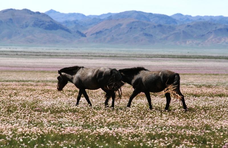 mongolia-agosto-2012-4