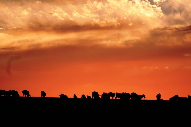 mongolia-agosto-2012-6